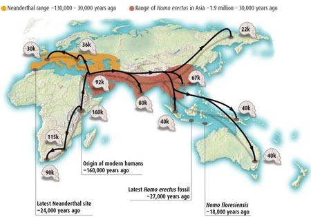 multi regional continuity the fossil evidence Genetic evidence for theories of human dispersal  multi – regional (regional continuity) theory  while the multiregional theory is best supported by the .