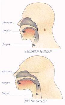 larynx.jpg