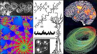 quantum brain dynamics and consciousness pdf