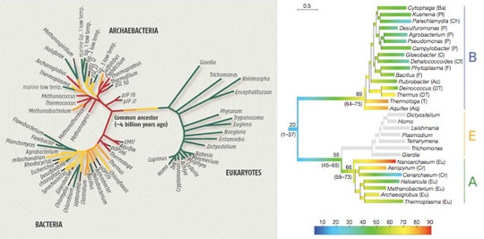how to draw a phylogenetic tree