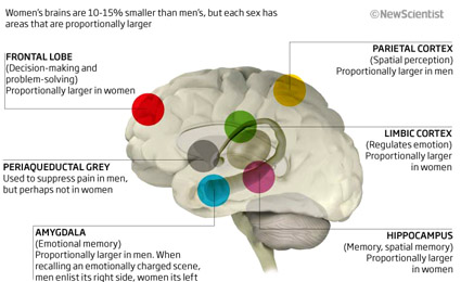 Sexual identity and the brain